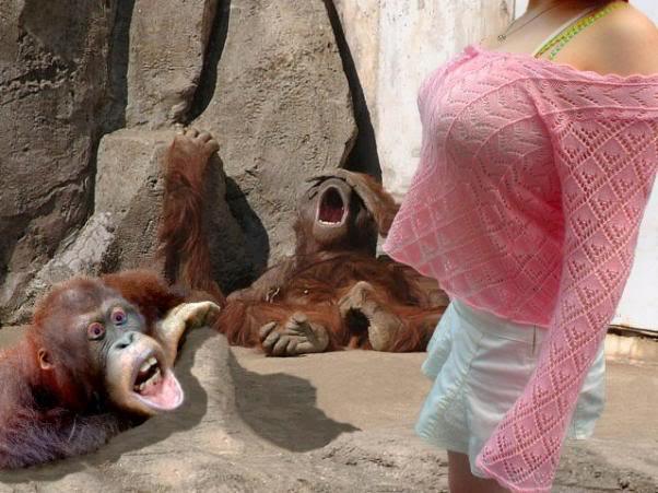 Monyet Kera-kera Imut, Lucu, Gokil Dari Belahan Dunia