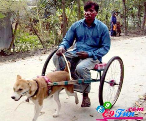 Anjing Sepeda